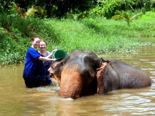 baanchang-elephant-park (7)